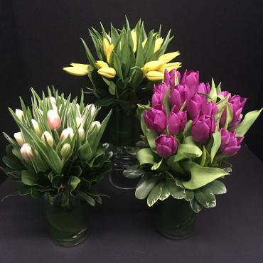 Variety of Tulips