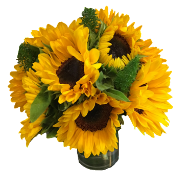 SUNFLOWER DELIGHT